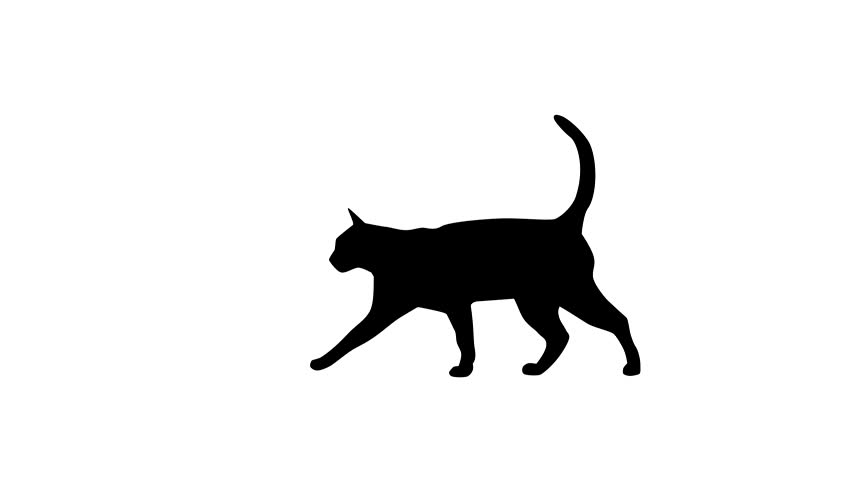 Silhouette of the black cat, animation on the white background