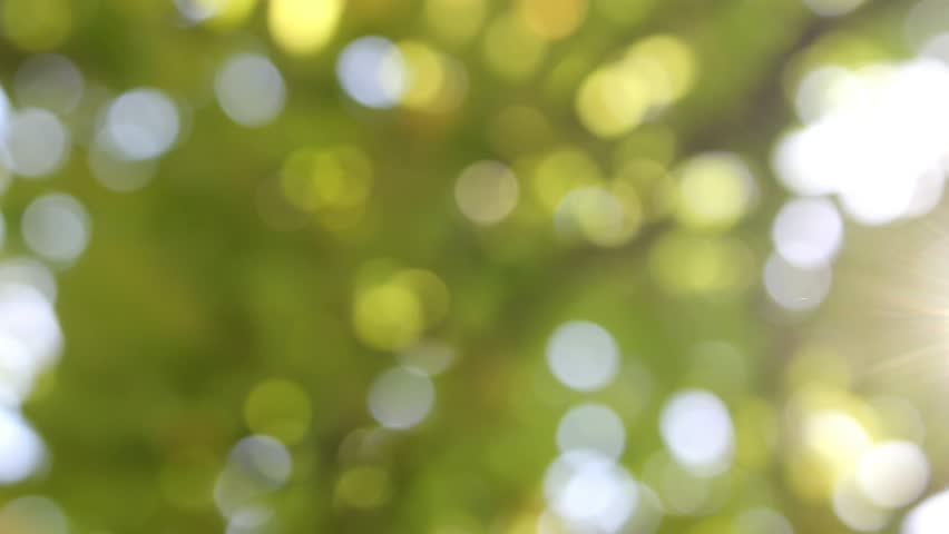 Sunlight shining through the leaves of trees, natural blurred background, Nature abstract background, nature green bokeh, Natural green motion background (seamless loop). 4K, UHD, ULTRA HD, 3840x2160.
