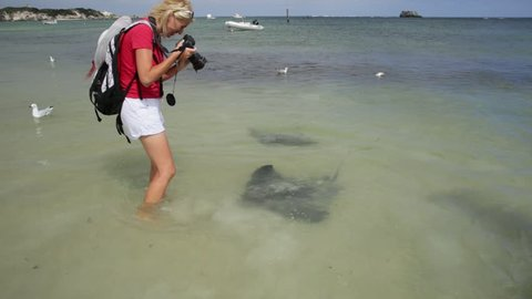 Happy blonde woman photographer at big Australian Eagle Ray close to shore in Hamelin Bay, Margaret River Region, Western Australia. Female photographing eagle sting rays popular local attraction.