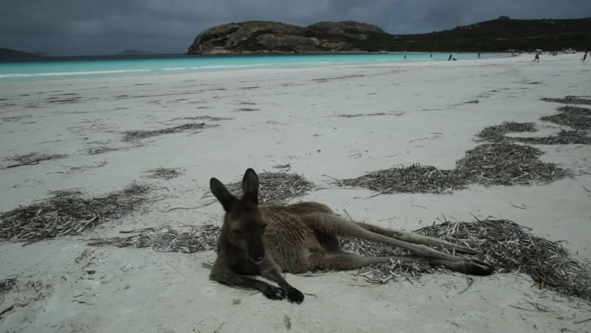 Bay and landscape at Cape Le Grand National Park, Western Australia image - Free stock photo ...