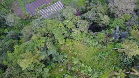 Aerial drone shot valley rice fields top view in mountain forest landscape little stream in Bali