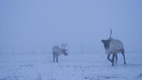 Reindeers Eating Winter Mug Cloud 4K