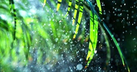 Rain water falling on green leaves slow motion