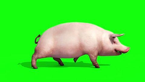 Pig Animal Farm Walkcycle Green Screen Side 3D Renderings Loop Animations