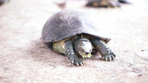 Baby turtle eating food