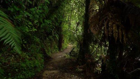 Empty dirt hiking path in tropical jungle woods in Abel Tasman National Park in New Zealand. Pedestal upward camera motion.