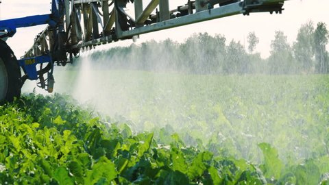Farming vehicles. Tractor spraying the ripening plants of sugar beet from pests, insects, diseases. 4K