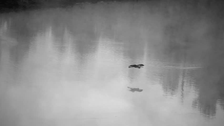 Heron Flies Across Lake with Fog Slow Motion BW