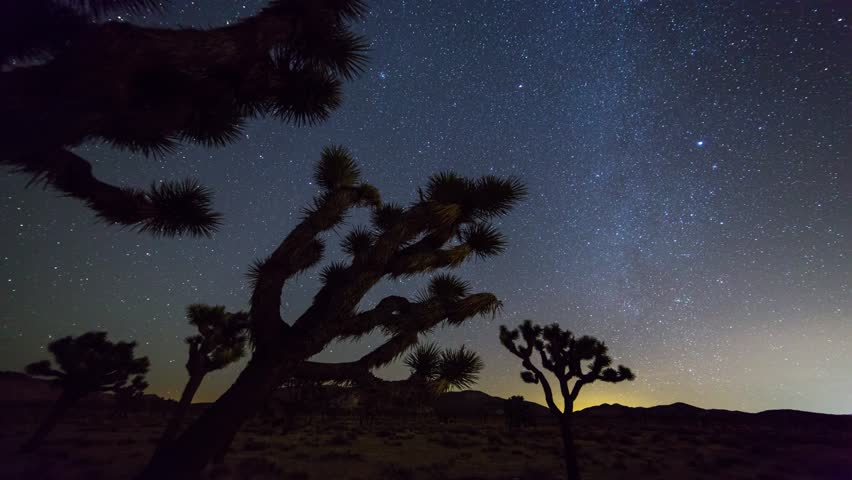 Joshua Trees night 4k 3d moving timelapse. Joshua Tree National Park, California