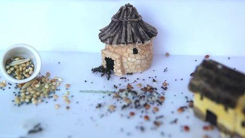 Ants crawl inside transparent box with  maze