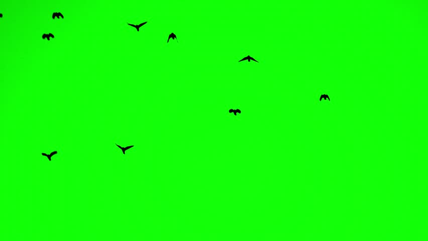 Crows fly from the bottom up at close range | Shutterstock HD Video #1007955829