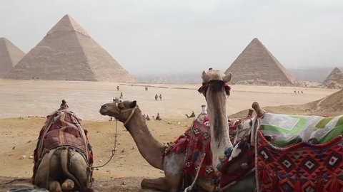 Egypt Cairo - Giza. General view of pyramids with camel