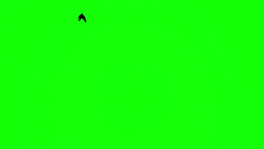 Birds fly one by one to greenscreen | Shutterstock HD Video #1008092689