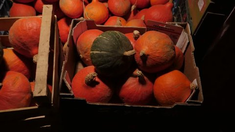 Different kinds of organic pumpkins on display.