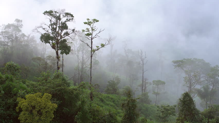 Pan along  cloudforest trees in the mist. The Rio Abanico Valley on the Amazonian slopes of the Andes in Morona Santiago province, Ecuador.