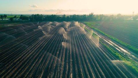 Irrigation Sprinklers in the field Aerial Shot