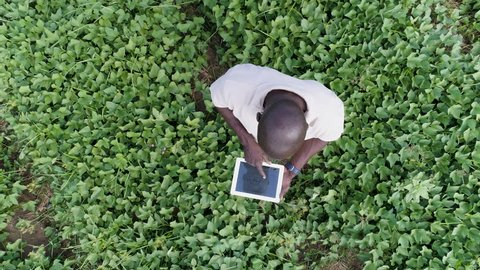 4K Aerial view directly above a black african farmer monitoring his vegetable crop with a tablet