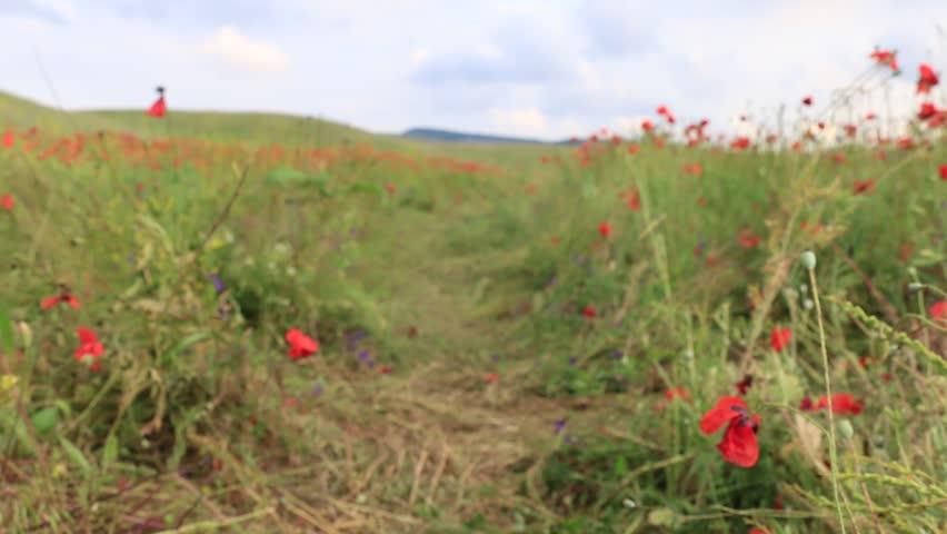 Girl running on the poppy field | Shutterstock HD Video #1008580309