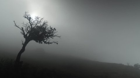 A beautiful silhouette of a tree on windy and misty mountain.