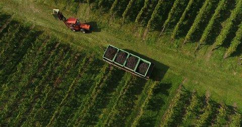 The grape harvesting machines in vineyard. Weinsberg in Heilbronn district, Germany.