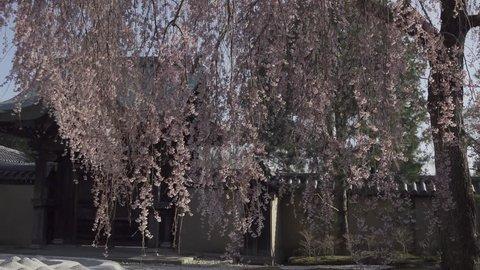 KYOTO JAPAN SAKURA CHERRY BLOSSOM 2018