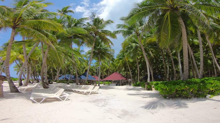Dominican Republic island Saona beach. Punta Cana beaches.  Palm trees on the beach