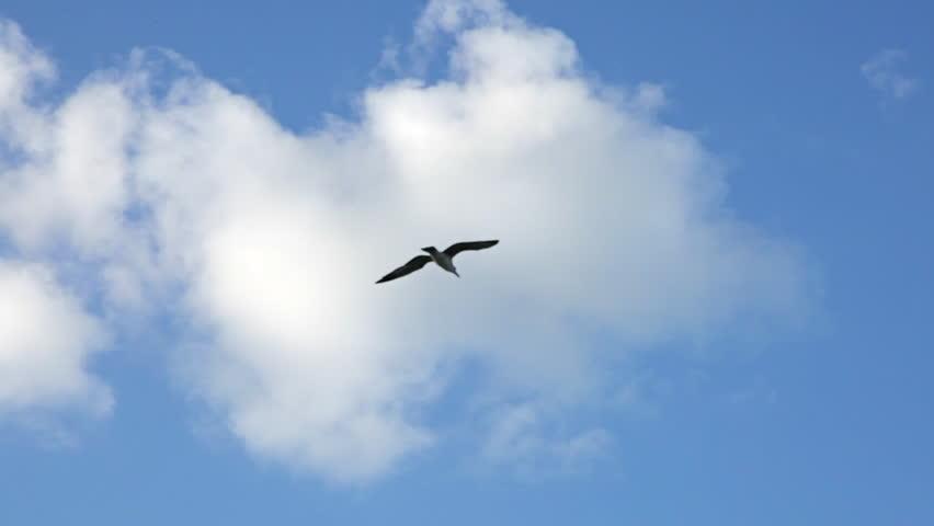 Bird flying in cloudy sky #1009058369