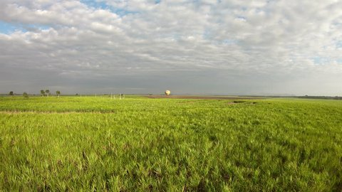 Sugarcane Field Epic Aerial Louisiana Agriculture. Aerial drone footage of crops growing in a field