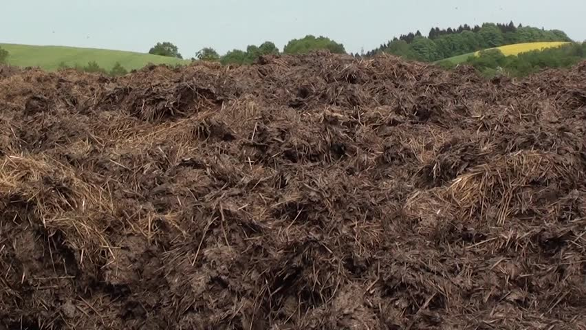 Pile of manure. Ambient sound with buzzing of flies, singing lark and voice of pheasant.