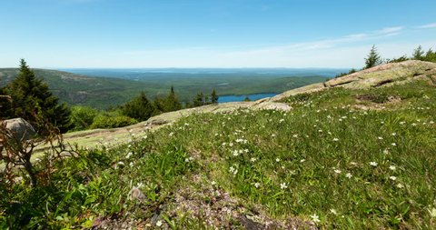 A motion controlled dolly time lapse passing by alpine flowers on Cadillac Mountain in Acadia National Park, Maine on a summer day.