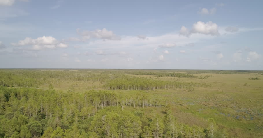 The massive expanse of the florida everglades