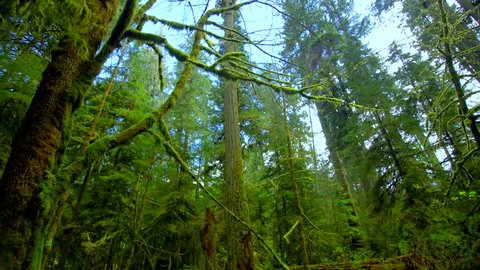 Vancouver Island Forest Tracking Shot
