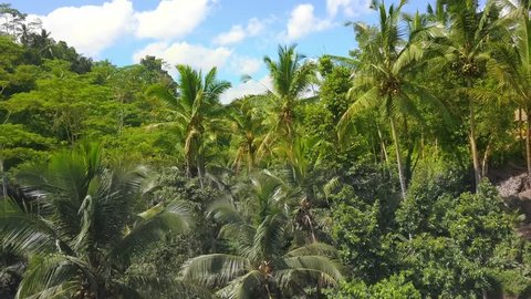 Aerial shot with dron of amazing Bali jungle rainforest landscape view from above with palm trees and tropical plants under a blue sky in travel holidays and Asia beautiful destination concept