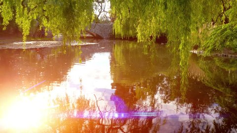 Willow Trees City Park Pond Nature Background, Bright Sun Light Leak Reflection