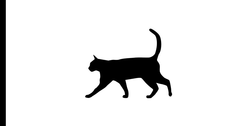Black and white cat on the black and white background, animation