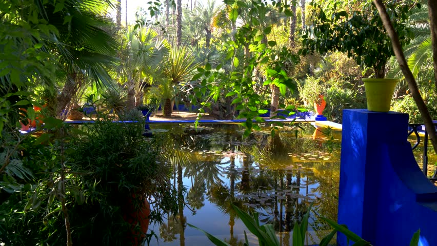 Pond in Majorelle botanical and artist's landscape garden. Marrakech, Morocco. 4K, UHD