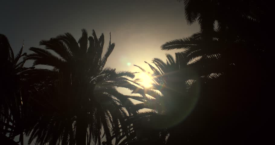 Sun peeking through palm tree leaves silhouettes on a windy day at sunset in Los Angeles, California. Slow motion, 4K UHD.