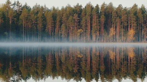 Autumn in Northern coniferous forest. Yellow birches reflect and tremble in waters of quiet forest lake. Misty morning