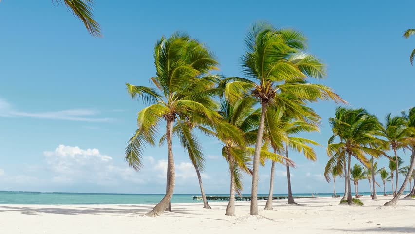 Tropical pristine beach with coconut palm trees and turquoise water, white sand. Maldives travel destination. Tropical island vacation idyllic background. Exotic sandy beach and palm tree on sea .