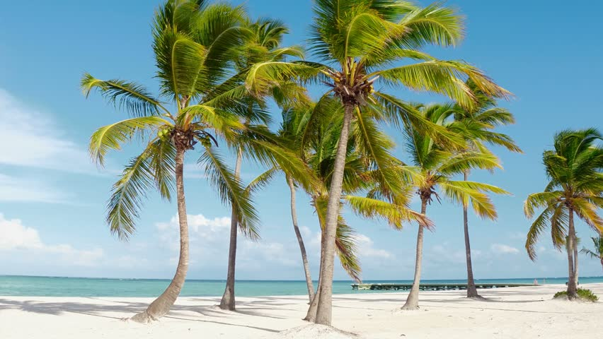 Tropical pristine beach coconut palm trees and turquoise water, white sand. Maldives travel destination. Tropical island vacation idyllic background. Exotic sandy beach, palm trees Caribbean sea .   Shutterstock HD Video #1010097179