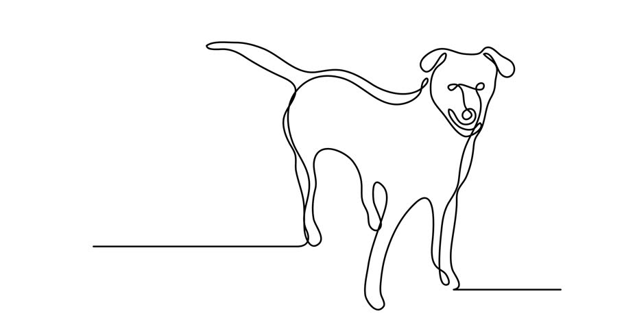 Doodle Dogs Stock Video Footage