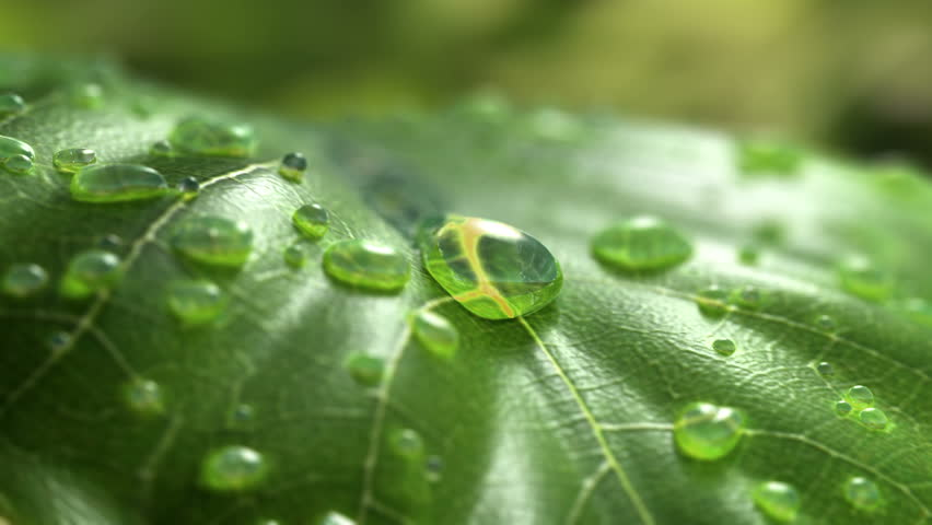 Water Drop Flows Down on a Leaf, Beautiful realistic 3d animation. 4K | Shutterstock HD Video #1010344019