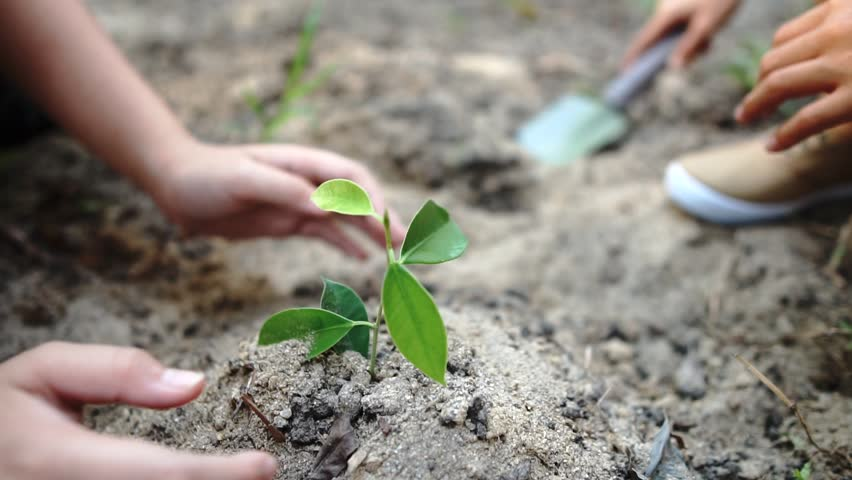 Young children taking care and planting a seedling.	 #1010509259