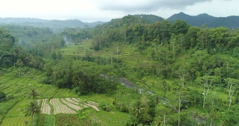 Aerial view of rice field and rainforest. Flying over of rice terrace, tilt shot
