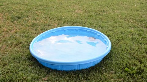Texas Heeler puppy jumping into a kiddie pool to fetch a silver bowl