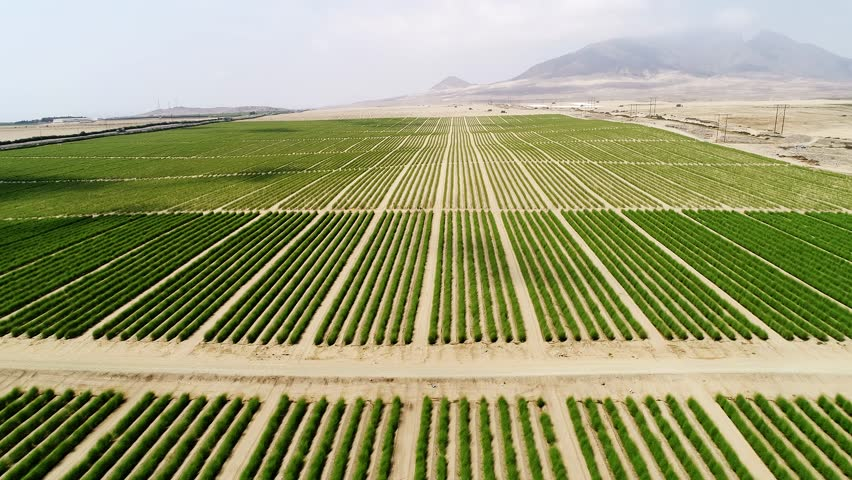 Aerial of fields in Peru, South America. Pure plantation in a desert.