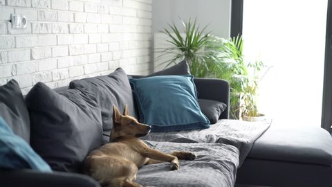Young man drinking coffee, relaxing sitting on sofa with his dog