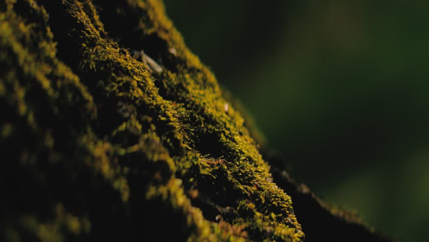 Close up of a tree bark and green moss