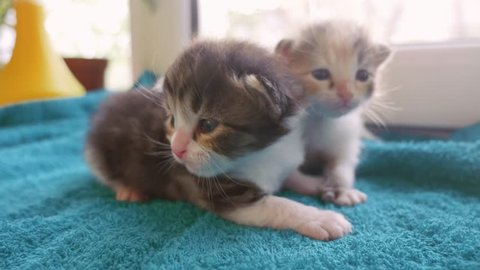 cute young kittens at home. little kittens sunlight mew and call the cat mother lifestyle from the window. cat kittens concept