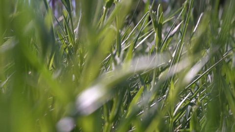 small animal creature running through a grass scampering through trail - POV point of view